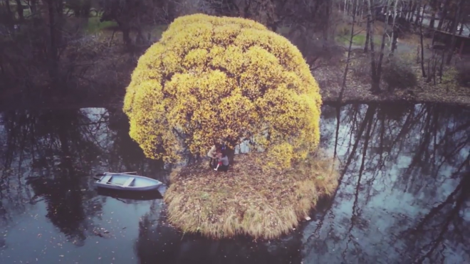 tree main